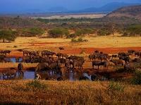 un viaje salvaje por tanzania